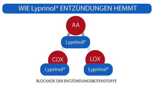 Lyprinol® wirkt als Entzündungshemmer durch eine Blockade von Entzündungsbotenstoffen.